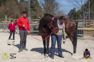 Esther Cano de Vegas_Os Parrulos_Osteopatia equina_animal zen_caballos 65
