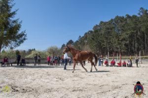 Esther Cano de Vegas_Os Parrulos_Osteopatia equina_animal zen_caballos 67