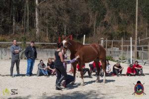 Esther Cano de Vegas_Os Parrulos_Osteopatia equina_animal zen_caballos 68