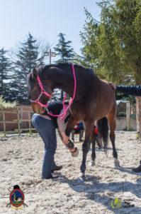 Esther Cano de Vegas_Os Parrulos_Osteopatia equina_animal zen_caballos 7
