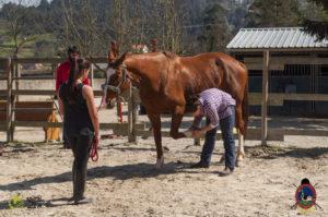 Esther Cano de Vegas_Os Parrulos_Osteopatia equina_animal zen_caballos 73