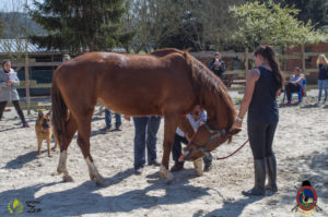 Esther Cano de Vegas_Os Parrulos_Osteopatia equina_animal zen_caballos 74