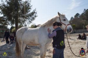 Esther Cano de Vegas_Os Parrulos_Osteopatia equina_animal zen_caballos 76