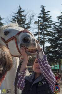 Esther Cano de Vegas_Os Parrulos_Osteopatia equina_animal zen_caballos 78