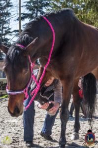 Esther Cano de Vegas_Os Parrulos_Osteopatia equina_animal zen_caballos 8
