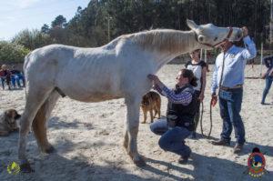 Esther Cano de Vegas_Os Parrulos_Osteopatia equina_animal zen_caballos 83