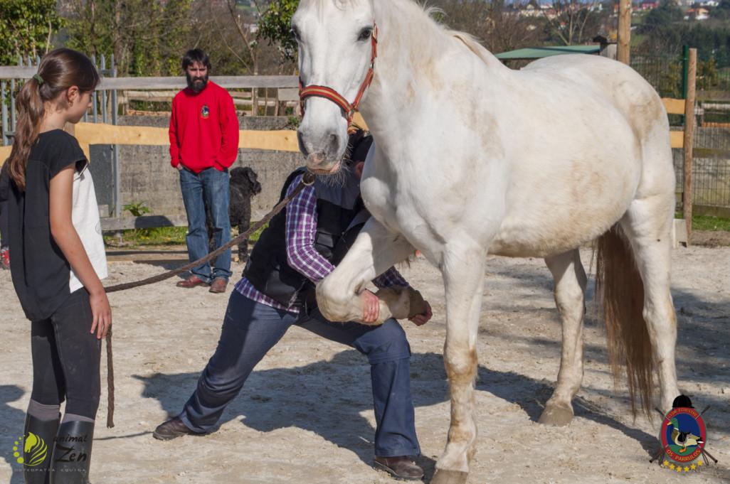 Esther Cano de Vegas_Os Parrulos_Osteopatia equina_animal zen_caballos 87