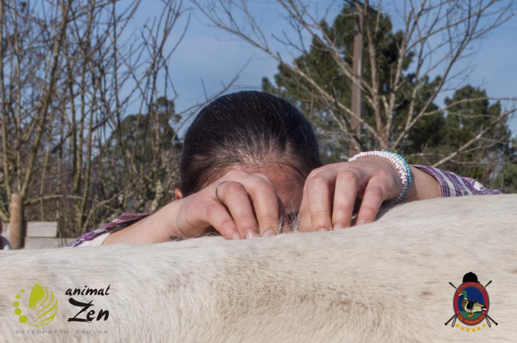 Esther Cano de Vegas_Os Parrulos_Osteopatia equina_animal zen_caballos 88