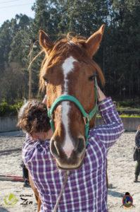 Esther Cano de Vegas_Os Parrulos_Osteopatia equina_animal zen_caballos 90