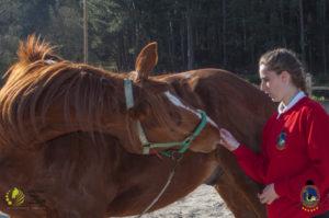 Esther Cano de Vegas_Os Parrulos_Osteopatia equina_animal zen_caballos 92