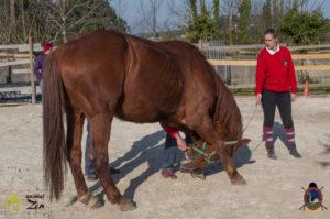 Esther Cano de Vegas_Os Parrulos_Osteopatia equina_animal zen_caballos 93