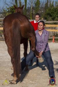 Esther Cano de Vegas_Os Parrulos_Osteopatia equina_animal zen_caballos 98