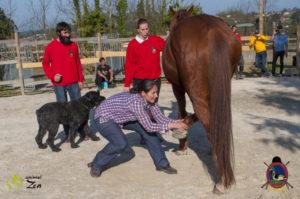 Esther Cano de Vegas_Os Parrulos_Osteopatia equina_animal zen_caballos 99